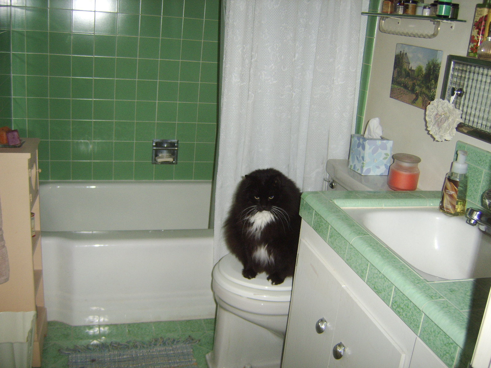 ... Ziggy On Toilet In Green Bathroom